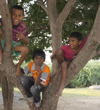 boys-in-tree.jpg